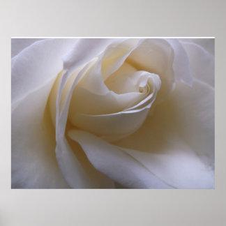 Cream Macro Rose Poster
