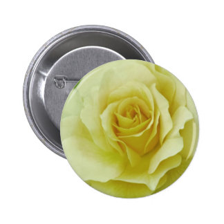 Cream Rose and meaning Button
