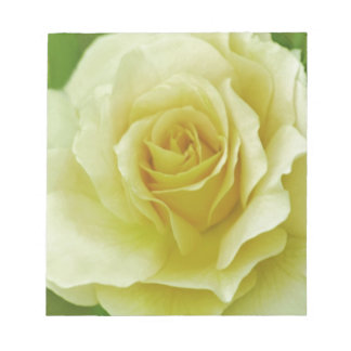 Cream Rose and meaning Memo Note Pads
