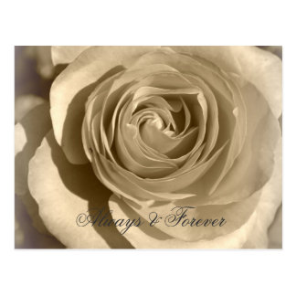 Cream Rose Forever and Always Postcard