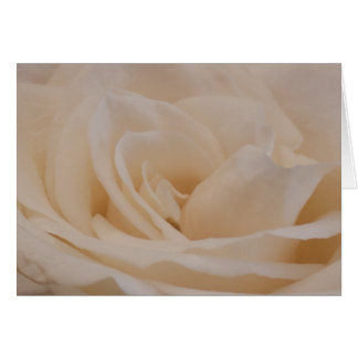 Cream Rose Greeting Card