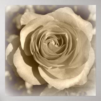 Cream Rose Posters