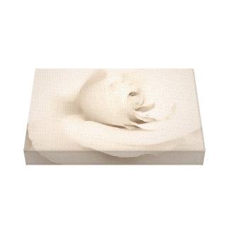 Cream Rose Stretched Canvas Print