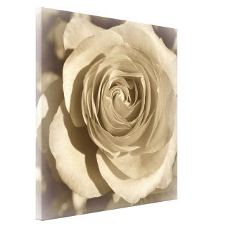 Cream Rose Stretched Canvas Print