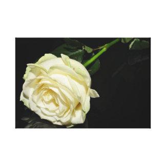 Cream Rose Wall Canvas Canvas Print