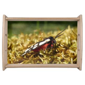 Cream-spot Tiger Moth Serving Tray