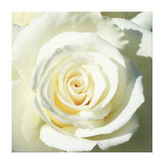 Cream White Rose - Canvas Canvas Print