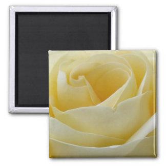 Cream white rose magnet