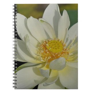 Creamy Water Lily.JPG Notebooks