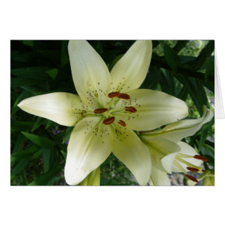 Creamy White Lily Cards