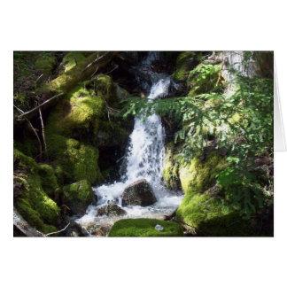 creeks nature card