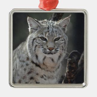 Creeping Bobcat Metal Ornament