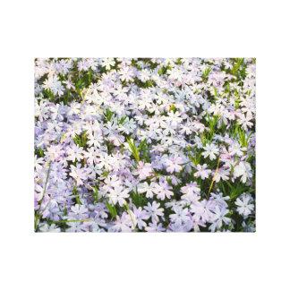 Creeping Phlox Flowers Photo on Canvas