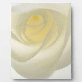 Creme Rose Eye Photo Plaques