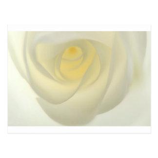 Creme Rose Eye Postcard