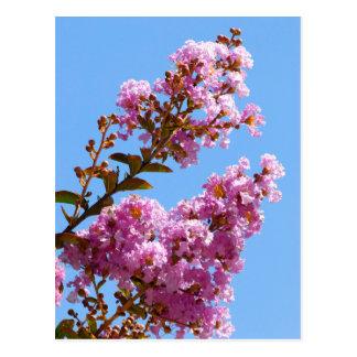 Crepe myrtle flower postcard