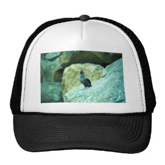 Crested Auklets Trucker Hats
