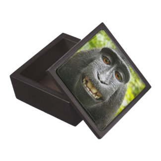 Crested Celebese Macaque Monkey Premium Gift Box