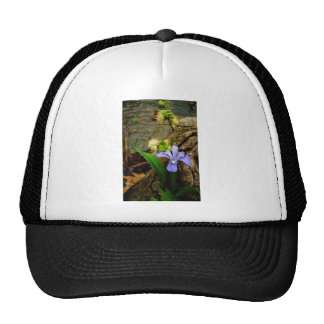 Crested Dwarf Iris blue purple white flower Cap
