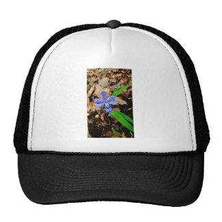 Crested Dwarf Iris purple blue wildflower Cap
