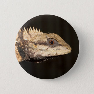 Crested forest lizard 6 cm round badge