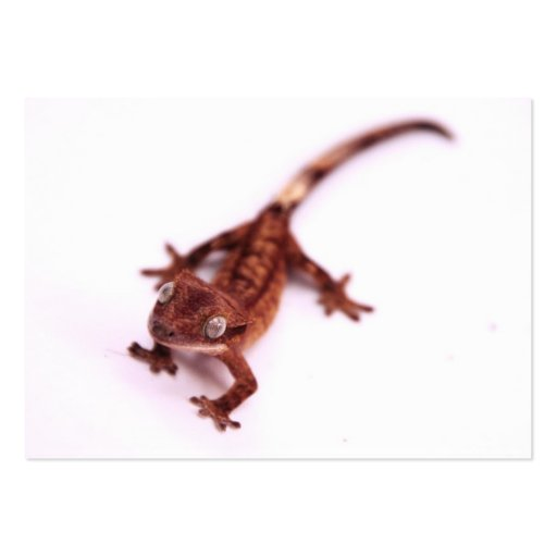 Crested Gecko Walking on an angle Business Card
