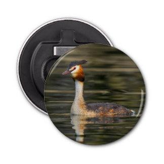 Crested grebe, podiceps cristatus, duck
