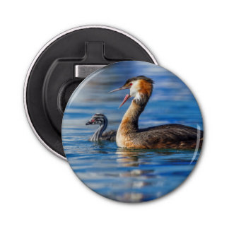 Crested grebe, podiceps cristatus, duck and baby bottle opener