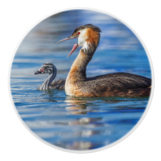 Crested grebe, podiceps cristatus, duck and baby ceramic knob