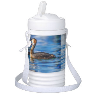 Crested grebe, podiceps cristatus, duck and baby drinks cooler