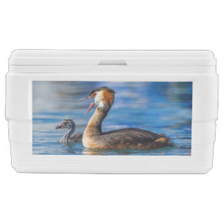 Crested grebe, podiceps cristatus, duck and baby ice chest