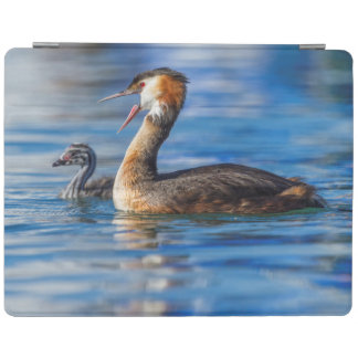 Crested grebe, podiceps cristatus, duck and baby iPad cover