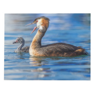 Crested grebe, podiceps cristatus, duck and baby notepad