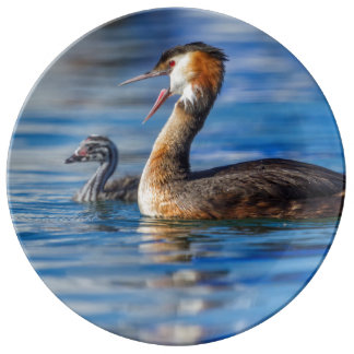 Crested grebe, podiceps cristatus, duck and baby plate