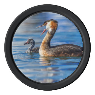 Crested grebe, podiceps cristatus, duck and baby poker chips
