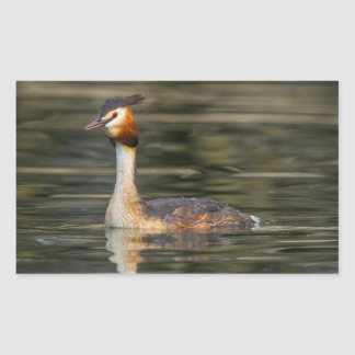 Crested grebe, podiceps cristatus, duck rectangular sticker