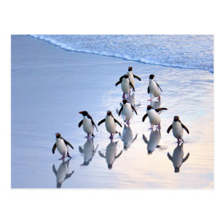 Crested Penguins Returning from the Ocean Postcard