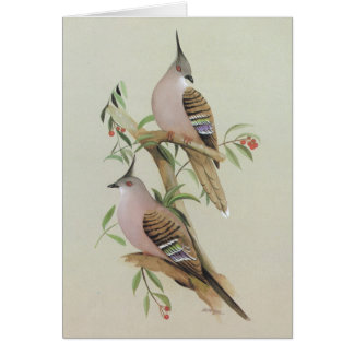 Crested Pigeon - Ocyphaps lophotes Card