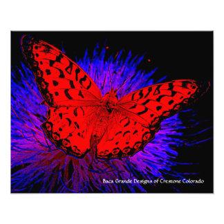 Crestone, Colorado - Butterfly Photo Print