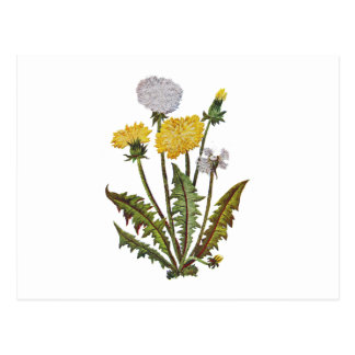 Crewel Embroidered Golden Dandy Lions Postcard