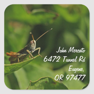 cricket home address labels square sticker