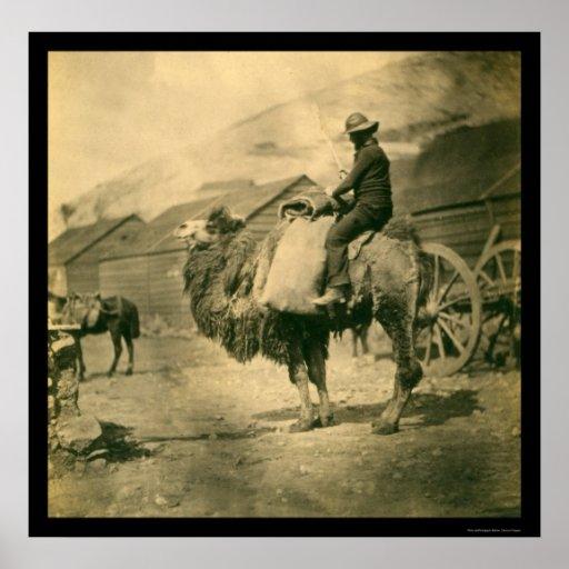 Crimean War Soldier on a Camel 1855 Poster