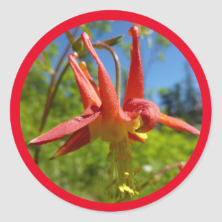 Crimson Columbine Round Sticker