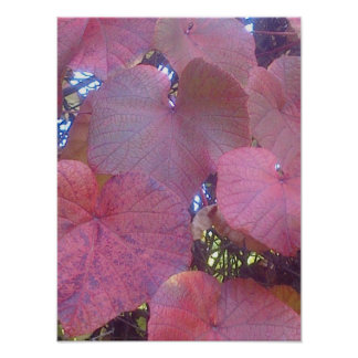 Crimson Glory Vine Poster