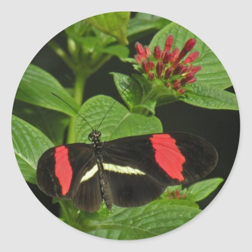 Crimson Longwing Butterfly Stickers