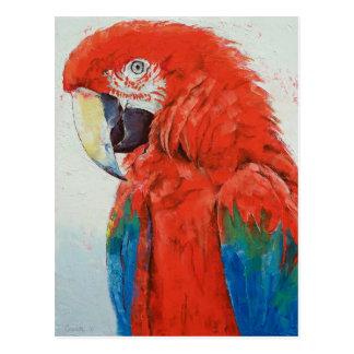 Crimson Macaw Postcard