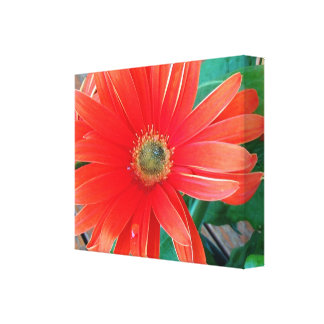 Crimson Red Daisy Wrapped Canvas Print