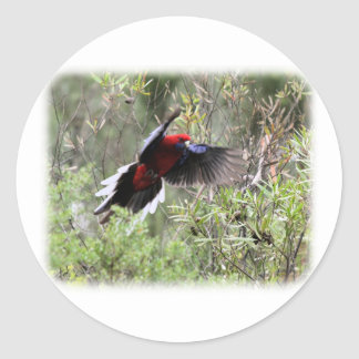 Crimson Rosella 9Y520D-062 Round Sticker