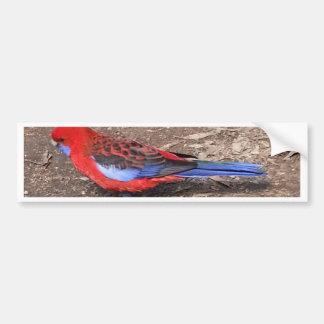 Crimson Rosella Bumper Sticker