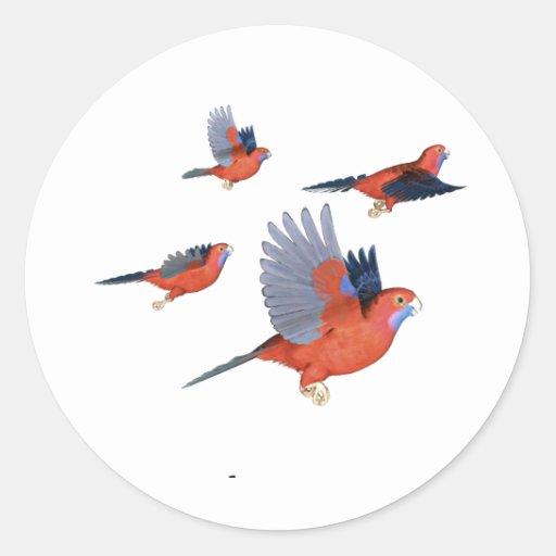 Crimson Rosella Parrot Flock Stickers